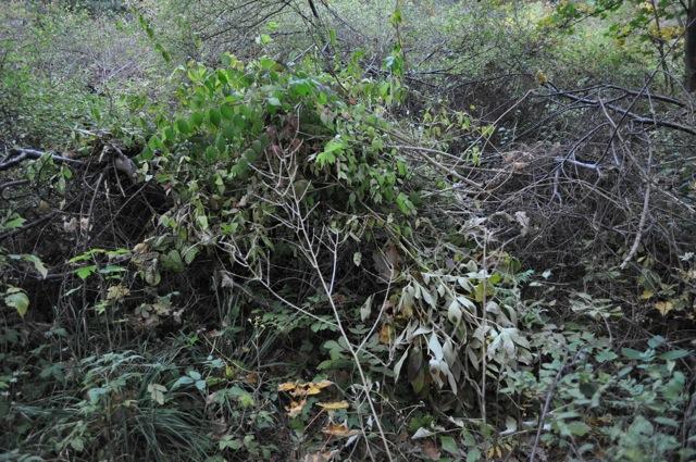 En av de största avfallshögarna i Långbrogårdsparken har placerats långt ut i parkrummet.