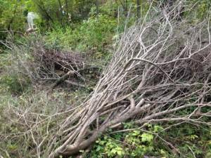 Dumpning av trädgårdsavfall, här stora knippen av syren utanför en tomt på Vallvägen.