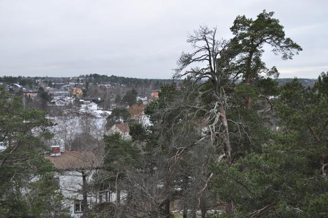 Utsikt från Långsjöhöjden ner mot Lingonbacken och den tomt som de två exploatörerna vill köpa! Notera de stora äldre träden på stadens mark!